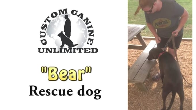 customcanine-bear