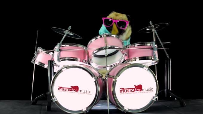 dog drummer 2