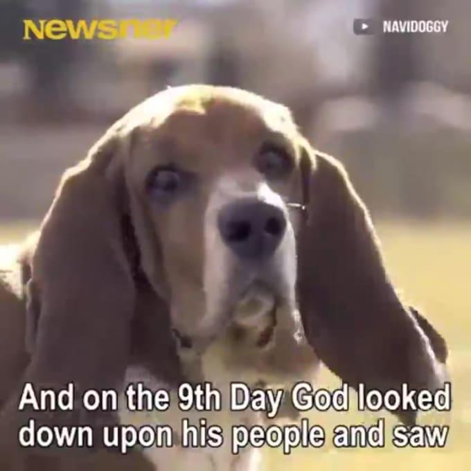 God Created A Dog By John Abbott