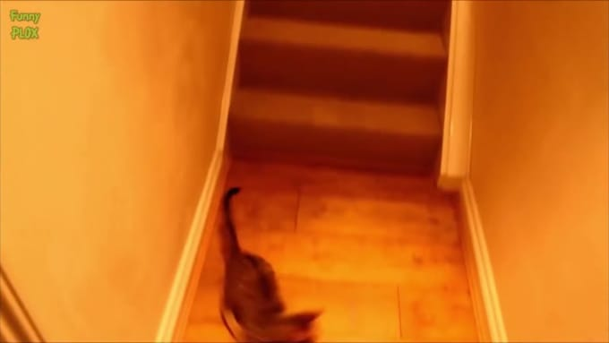 Corrected Cat Laser Pointer