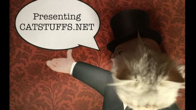 catstuffs