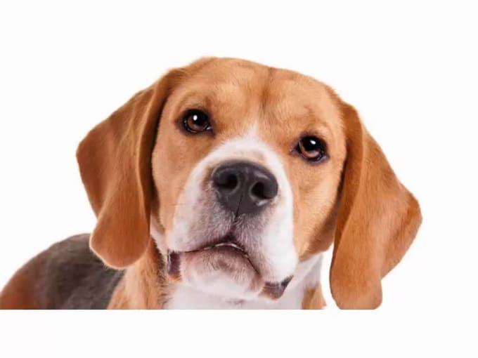 Beagle02
