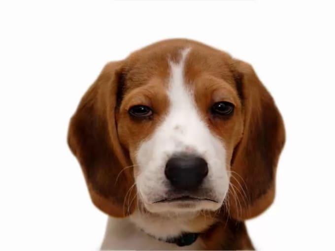 Beagle2ndgig02