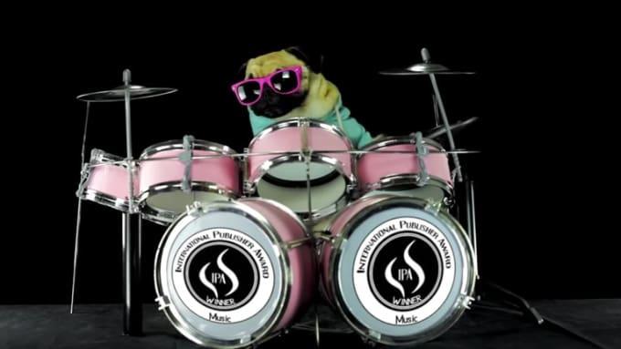 Dog Drummer