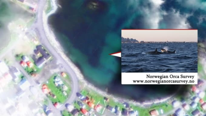 Norwegian Orca Survey_earth zoom out