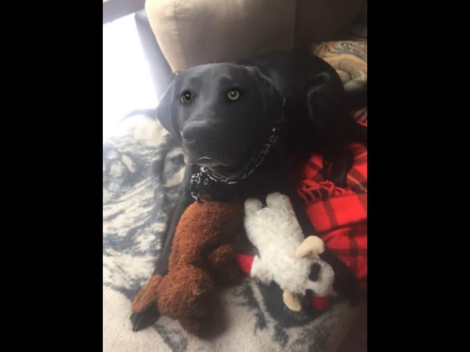 Molly with toys WMV