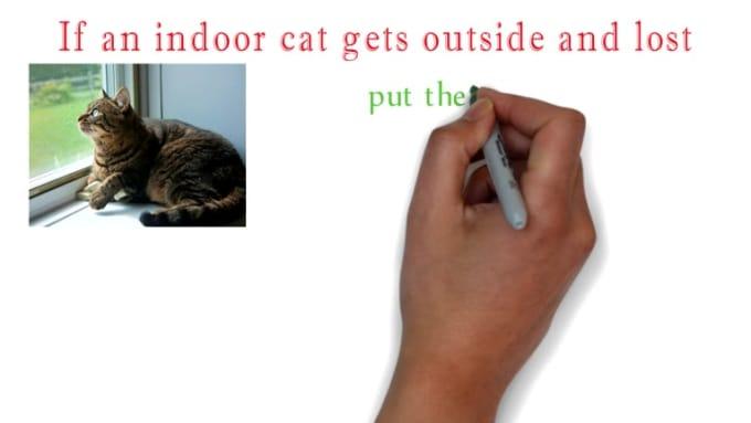 Cat & Dog scenes