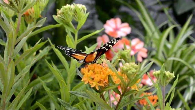 Butterfly - 3830