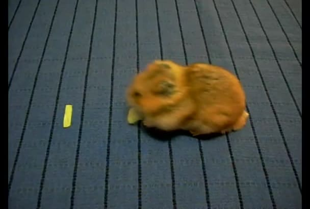 make a video of my hamster who writes your message