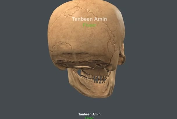 3d model of anatomy, skeleton, bones, organic parts