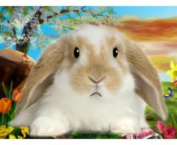 be Bunny, the rabbit, your Animal Spokesperson
