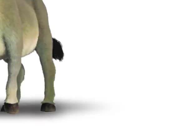 impersonate Donkey from Shrek