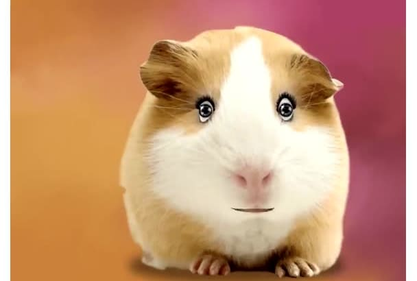 have Hannah the Hamster say whatever you want