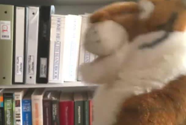 sing Happy Birthday Using My Tiger Puppet