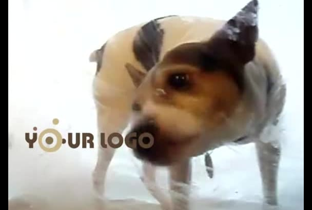 make cutest intro video of this dog licking your logo