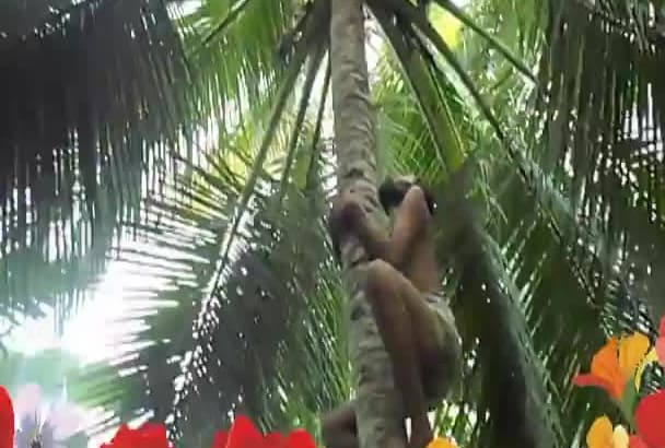 climb a coconut tree and find your happy birthday and happy anniversary message