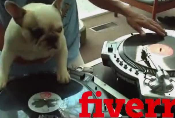 create This DJ Scratch Dog Party Video