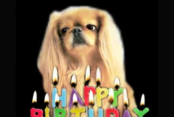 make a Happy Birthday dog or cat singing video