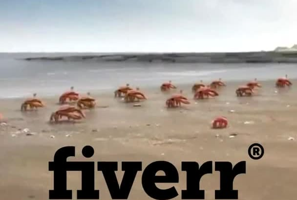 put your text and logo in this crab teamwork animation