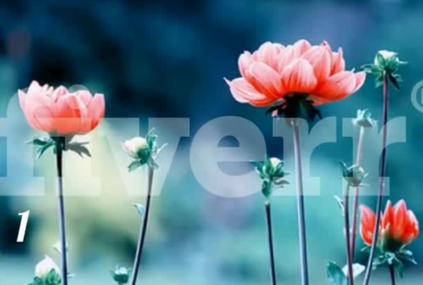 , create a dynamic slideshow, 29 photo
