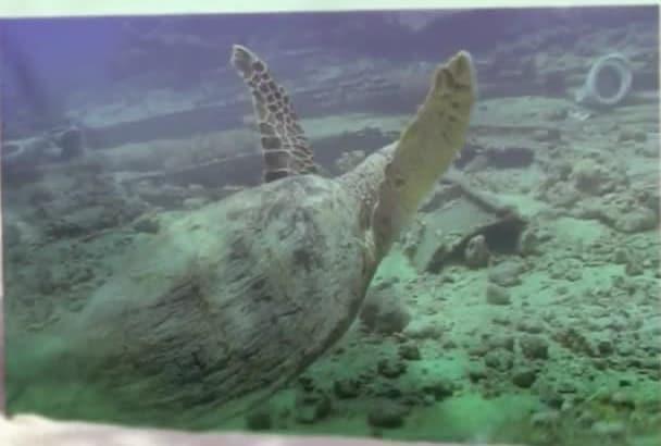 create a Beach Sand Ocean Slideshow Presentation