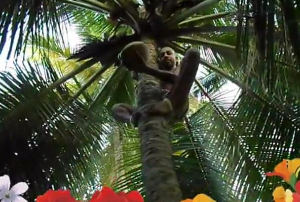 climb coconut tree and find your merry Christmas and happy new year message