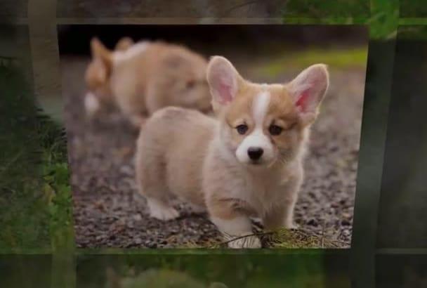 create a Pet Photo Video Album of your Amazing Pet