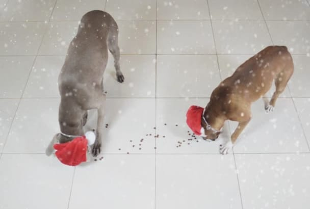 make my Dogs write Happy Holidays