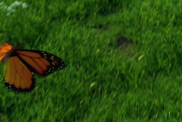 do the real butterfly garden nature animation logo intro