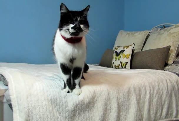 make an eye catching cat PROMOTIONAL testimonial video
