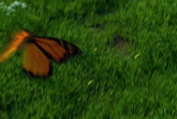 do realistic butterfly Animated Logo Video Intro