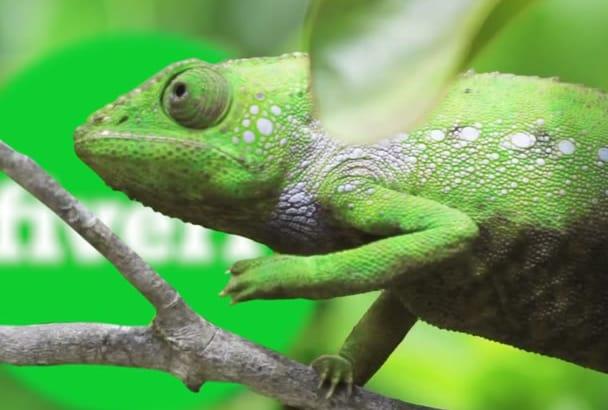 make FUNNY chameleon logo reveal