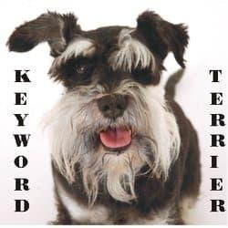 keywordterrier