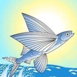 theflyingfish