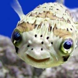 fisheeluv