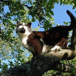 peanutcat122