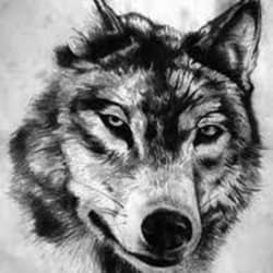wolfbainz