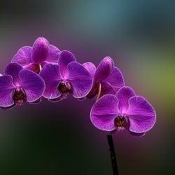 john_orchids
