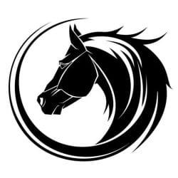 stallionking
