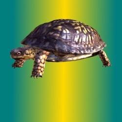 nick_the_turtle