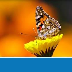 butterflyave