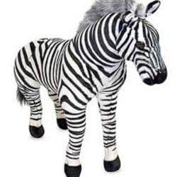 zebraexpress