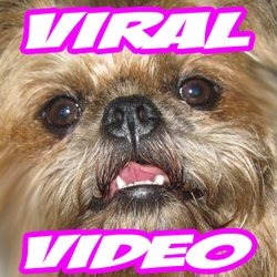viralvideo
