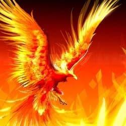 phoenix_tech