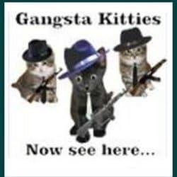 hipcat