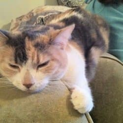 snoringcat