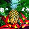 pineapplehomes