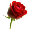 rosevale
