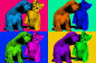 make a Andy Warhol style PopArt of your pet