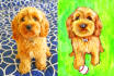 hand draw paint an animal PET illustration